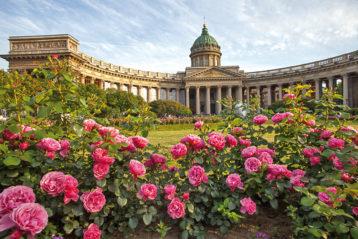 Розы у Казанского собора